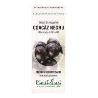 coacaz-negru-ribes-nigrum